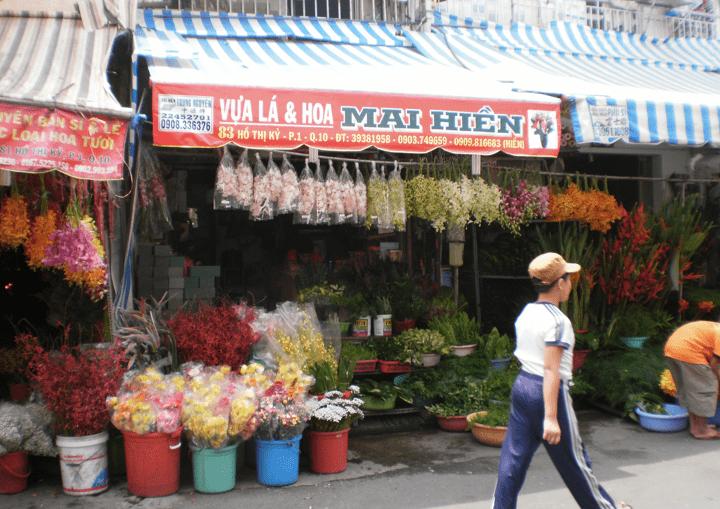 Vua_La_-_Hoa_Mai_Hien