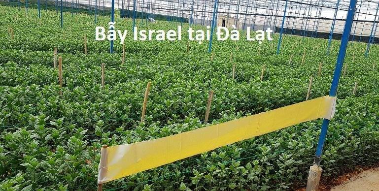 bay-vang-israel-tai-da-lat